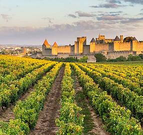 Vineyard in Carcassone, France
